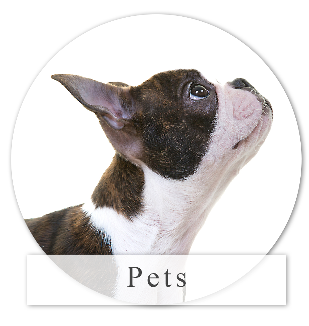 Pet Photography in Yorkshire